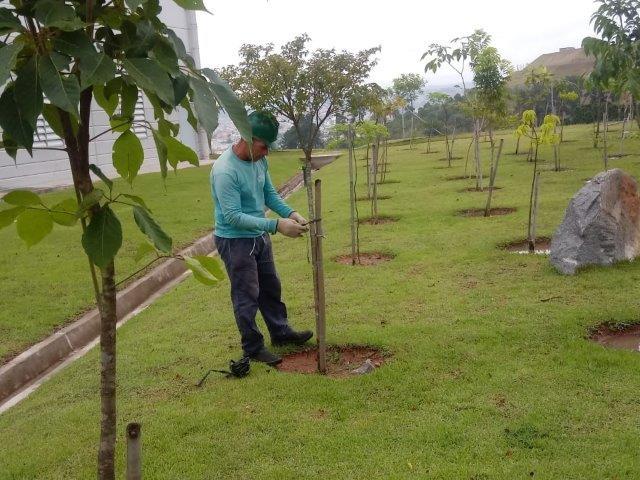 Serviço de reflorestamento