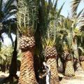 Plantas de grande porte