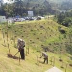 Empresas de reflorestamento