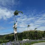 Manutenção de paisagismo