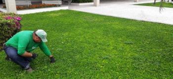 Manutenção de gramados